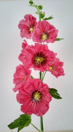 Hollyhocks - Original Watercolor Painting - SOLD (Prints Available) by PinarBelendir on Etsy