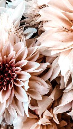 Stuc de Plusieurs Parties Élégant Rosette Fleurs ou Mur