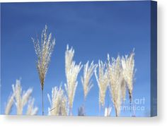 """""""Be the one to stand out from the crowd."""" -Joel Osteen Stand Out Canvas Print by Inspired Arts"""