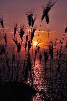 ✯ Magic Sunset