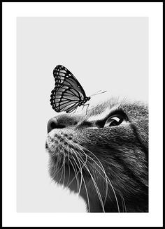 Cat and Butterfly Poster - Animal - Posterstore.com