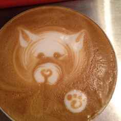 husky/wolf latte,  latte art by jessi hardesty at atomic cafe in marblehead, mass