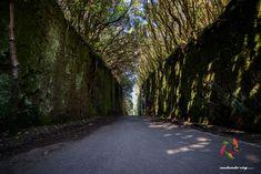 Camino con sombra...... #tenerife #anaga   #hikingtenerife #hiking #trekking #landscape #outdoors  #fotostenerife  #tenerifesenderos #senderismo #skylovers #naturlovers #nature  #flowers #IslasCanarias