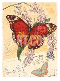 Vintage Botanical Butterfly Print Print by Bessie Pease Gutmann .