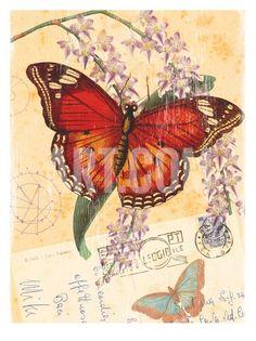 Vintage de la mariposa Impresión botánica