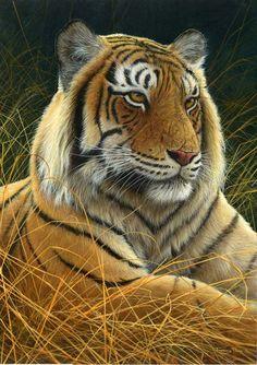 sumatran tiger by Jeremy Paul - great website - love his work