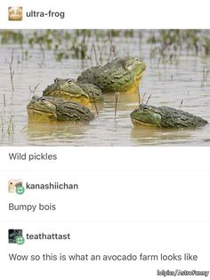 A bumpy avocado farm Animal Memes, Funny Animals, Cute Animals, Baby Animals, Animal Pictures, Funny Pictures, Bad Puns, Cute Frogs, Frog And Toad