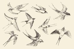 Set of 9 flying birds by grop on Creative Market