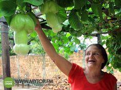 OpinionPublicaSantafesina(ops): la fabrica de.............en vegetales