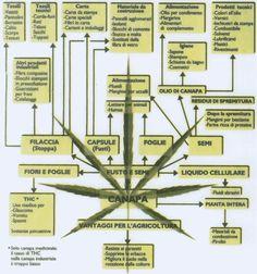 Οι πολλές χρήσεις της βιομηχανικής κάνναβης (κείμενα στα Ιταλικά) είναι ο λόγος που η κάνναβη πρέπει να επανενταχτεί στην οικονομία της χώρας μας: από την καλλιέργεια του φυτού, μπορούν να τροφοδοτηθούν πάρα πολλές διαφορετικές μεταποιητικές δραστηριότητες.  Gli usi benefici della Canapa