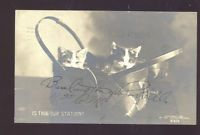 RPPC ROTOGRAPH CUTE CAT CATS KITTEN IN BASKET REAL PHOTO POSTCARD 1909