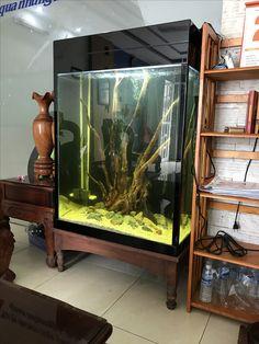 10 Tips on Designing a Freshwater Nature Aquarium Terrarium Tank, Aquarium Terrarium, Planted Aquarium, Saltwater Aquarium, Aquarium Fish Tank, Freshwater Aquarium, Discus Tank, Betta Fish Tank, Aquascaping