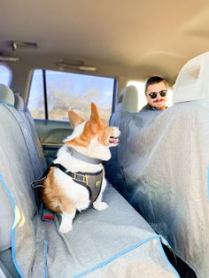 Dog Hammock, Bench Seat Covers, Dog Car Seats, Adventure Gear, Dog Activities, Rubber Flooring, Dog Travel, Dog Accessories, Your Dog