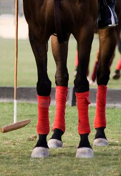 Little red Polo pony. Polo Horse, Horse Gear, My Horse, Horse Riding, Most Beautiful Animals, Beautiful Horses, Polo Wraps, The Sporting Life, Le Polo