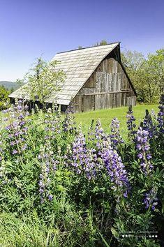 Barn...so lovely. ..