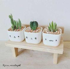 5-plantas-faceis-de-cuidar-para-voce-ter-em-casa-cactos-8