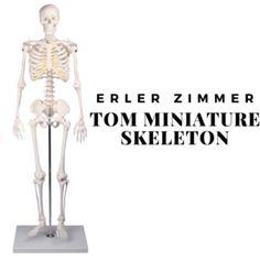Αναπαραγωγή του ανθρώπινου σκελετού σε σμίκρυνση περίπου στο μισό του πραγματικού μεγέθους. Κρανίο, χέρια και πόδια αποσπώνται. Ύψος χωρίς τη βάση περίπου 80εκ.  Ιδανικό για εκπαιδευτικούς σκοπούς Κατασκευή απο ανθεκτικό πλαστικό υλικό Ειδική βάση στήριξης(περιέχεται στη συσκευασία) #προπλασμα #προπλασματα Anatomy Study, Human Anatomy, Life, Human Body Anatomy, Body Anatomy