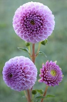 40 Amazing Pictures of Beautiful Flowers