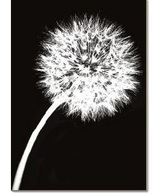 Jenny Kraft 'Dandelion Tilt' Canvas Art | Overstock.com