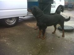 Lost female dogs found in South Kirkby yesterday. Please help us find its owners.  If you require any further information in respect of this dog please contact Wakefield Council on 0345 8 506 506 and quote ref CRM:LVE:SD-002050/01. Proof of ownership will be required before the dog is released. All appropriate fees will needRead More