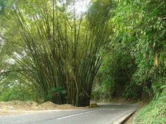 Parque Henry Pittier, vía Ocumare de la Costa de Oro