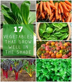 17 Vegetables That Grow Well In The Shade Growing Vegetables In Pots, Container Gardening Vegetables, Planting Vegetables, Organic Vegetables, Vegetables List, Succulent Containers, Container Flowers, Container Plants, Organic Nutrients