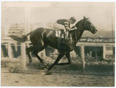 Man O' War, racing at Belmont, where one of the world's greatest thoroughbreds cemented his reputation. The horse was actually owned by the son of Belmont Park namesake August Belmont. All The Pretty Horses, Beautiful Horses, Man Of War, Sport Of Kings, Thoroughbred Horse, Racehorse, Horse Pictures, Horse Breeds, Horse Racing