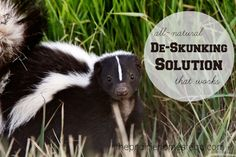 remove skunk smell