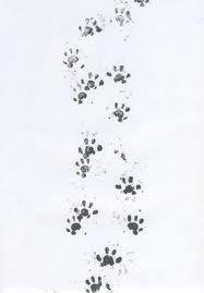 hedgies's  footprints