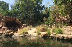 jungle cruise disneyland - Google Search
