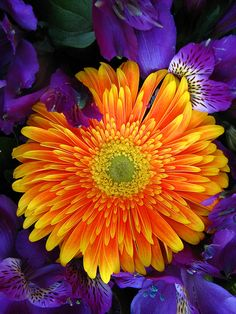Orange and Purple - Gerbera Daisy and Alstromeria Amazing Flowers, My Flower, Flower Power, Beautiful Flowers, Orange And Purple, Orange Flowers, Deep Purple, My Secret Garden, Plantar
