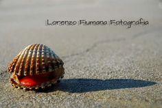 Cesenatico, FotoQuadri d'autore http://fiumanalorenzo.blogspot.it/