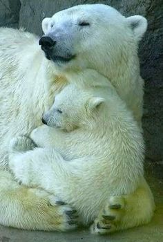 momma & baby...awww