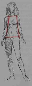 """Learn to Draw: Human Body. Female structure. """"A woman has narrow shoulders and wide hips"""""""