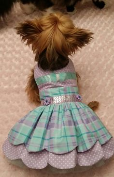 Special occasion dog dress size medium