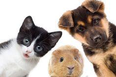 Umzug mit Hund und Katze und Kleintieren funktioniert nicht immer problemlos…