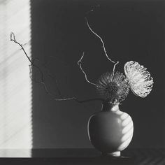 Flower Arrangement, by Robert Mapplethorpe. Gelatin silver print Image: 49 x 49 cm x 19 in.) Promised Gift of The Robert Mapplethorpe Foundation to the J. Paul Getty Trust and the Los Angeles County Museum of Art, © Robert Mapplethorpe Foundation Bw Photography, Still Life Photography, Minimalist Photography, Photography Backdrops, Ikebana, Robert Mapplethorpe Photography, Getty Museum, Still Life Photos, Rule Of Thirds