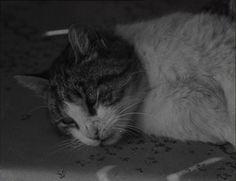 Dir: Agnès Varda DoP: Louis Stein & Paul Soulignac ( film-stills ~ La Pointe Courte ),1955