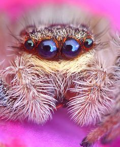 scary, my teacher would love it so much Beautiful Bugs, Weird Creatures, Bugs And Insects, Amazing Spider, Amphibians, Reptiles, Beautiful Creatures, Animals Beautiful, Cute Animals
