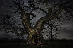 beth-moon-vieu-arbre-etoile-04