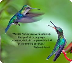 Symbolic Hummingbird Facts