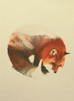"""Snow Fox"" Art Print by Andreas Lie on Artsider.com"