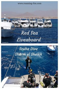 Scuba dive the Red Sea on a Liveaboard from Sharm el Sheikh — Roaming Fox Egypt Travel, Africa Travel, Places To Travel, Travel Destinations, Egypt Culture, Sharm El Sheikh, Tourist Sites, Visit Egypt, Red Sea