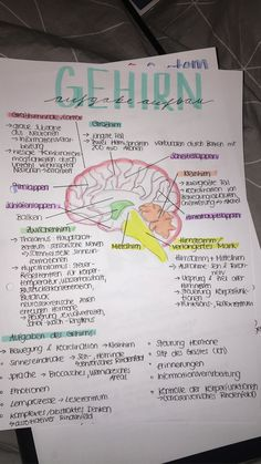 brain structure and function - cerebellar temporal lobe frontal lobe cerebral cortex midbrain midbrain brainstem You are in the rig - Vie Motivation, Study Motivation, Nursing School Notes, Medical School, Brain Structure, School Organization Notes, School Study Tips, Student Studying, Good Notes
