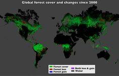 Mapas detallados de los bosques del mundo — Noticias de la Ciencia y la Tecnología (Amazings®  / NCYT®)