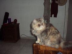 ¿Quién es? ¿Quién es? El gato ingleeeeeeés!!