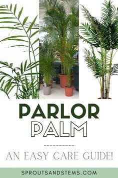 Pot Plants, Large Plants, Indoor Palms, Indoor Succulents, Low Light Plants, House Plant Care, Peat Moss, Mother Plant, Propagation