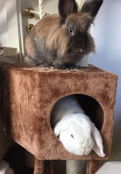 Goooooood Morning Everybody !!! The Bunny Brothers in Norway are awake!! Duncan & Dexter by Inger Johanne :)