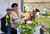 dobrý a krásný večer – Obrázky.cz Dogs, Animals, Animales, Animaux, Pet Dogs, Doggies, Animal, Animais