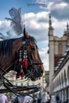 Horses and Cracow  ,photo from my blog: http://www.photo4art.eu/  #architecture #carriage #city #cityscape #clouds #hall #horse #kraków #krakow #poland #sky #town #urban #old #cracow #europe #travel
